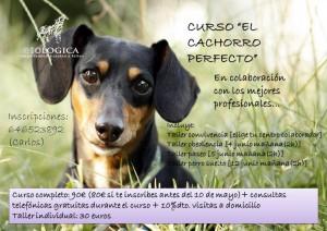 Clinica-Veterinaria-Sedavi-Curso-Cachorro