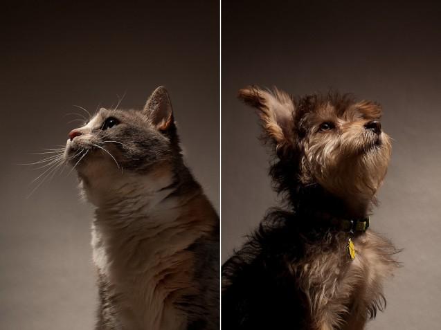 Mitos y falsas creencias sobre la esterilización de mascotas