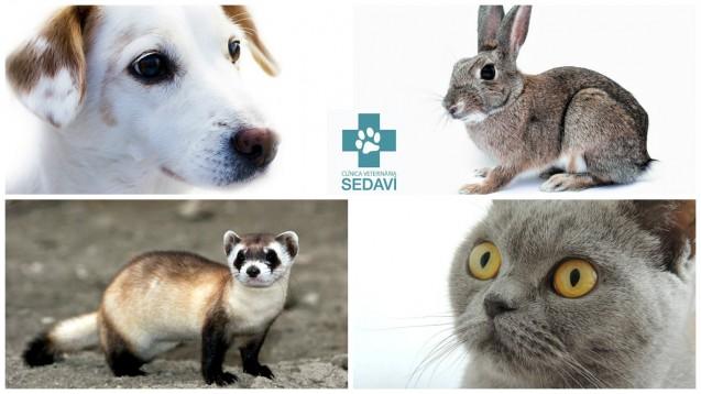 Los beneficios de la esterilización en distintas mascotas