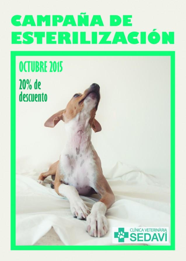Campaña Esterilización Clínica Veterinaria Sedaví 2015