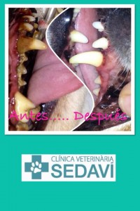 Clinica Veterinaria Sedavi dentadura perro