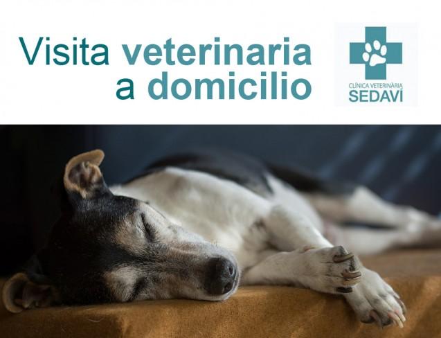 Visita veterinaria a domicilio para tu mascota con la Clínica Veterinaria Sedaví