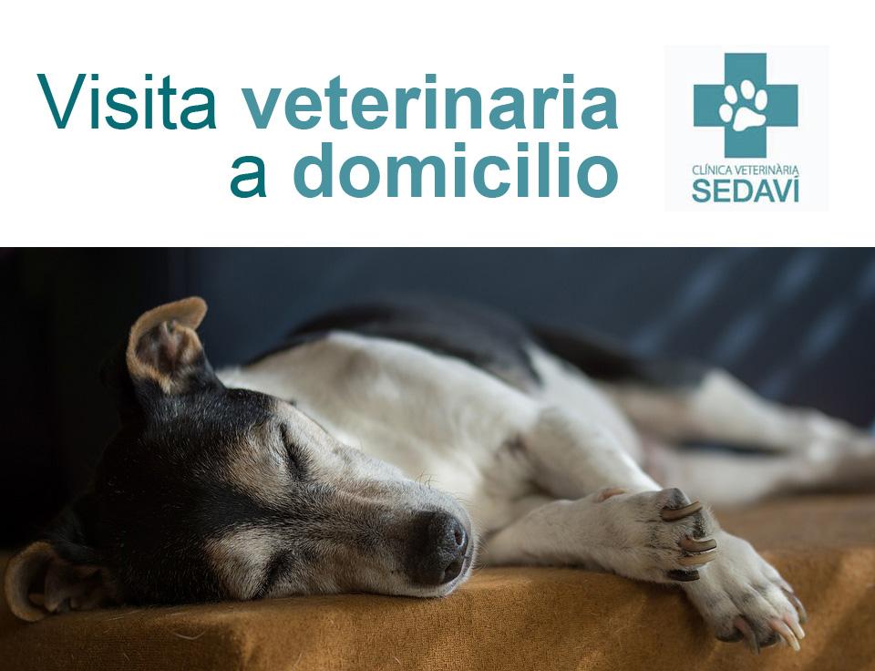 Visita Veterinaria A Domicilio Para Tu Mascota Con La Clinica