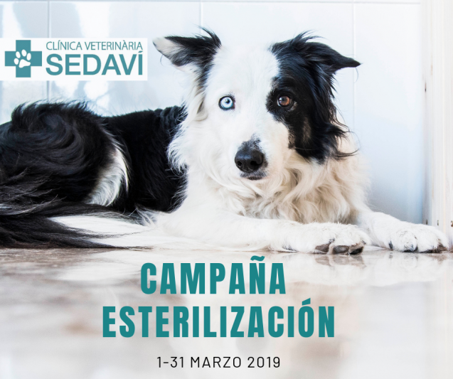 Campaña de esterilización marzo 2019