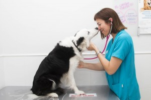 clinicaveterinania0064