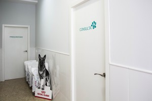 clinicaveterinania0148