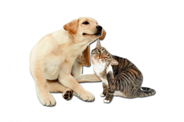 La importancia del cuidado de la piel de tu mascota